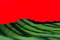 One piece надежды Стоковое Фото