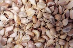 One pile of garlic Stock Images