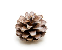 One pine cone. Isolated on white background Stock Image