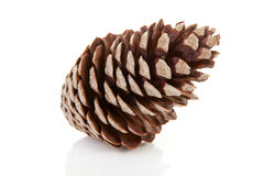 One pine cone. One big pine cone isolated on white background Royalty Free Stock Photography