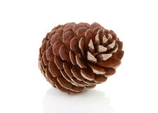 One pine cone. One big pine cone isolated on white background Stock Photos
