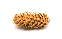 One pine cone. Isolated on white Royalty Free Stock Photos