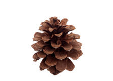 One pine cone isolated Stock Photo