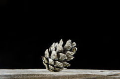 One pine tree cone. One single pine tree cone at black background Royalty Free Stock Photography