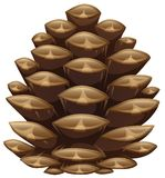 One pinecone in closeup look. Illustration vector illustration
