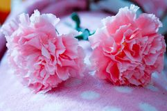 One pink carnation on blanket so beautiful and soft. One pink carnation on a blanket so beautiful and soft. Light shines down the side of the flower Stock Photography