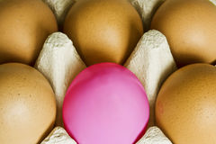 One pink egg and five brown. A single pink egg in the middle of normal brown eggs Stock Image