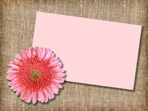 One pink flower with message-card Royalty Free Stock Photos