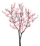 One pink full bloom sakura tree (Cherry blossom) on white background. One pink full bloom sakura tree on white background vector illustration