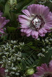 One pink glass ring on the fresh flower and leaves Stock Photography