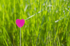 One pink heart with grass background Stock Image