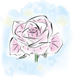 One pink rose Royalty Free Stock Photography