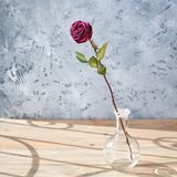 One pink rose flower with long stem and green leaves in glass round vase on wooden table on gray background close up, sun light stock photography