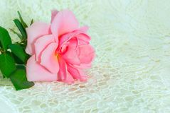 One pink rose on lace Royalty Free Stock Photo