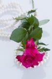 One pink rose with pearls. One pink rose with pearl necklace on white background Royalty Free Stock Image