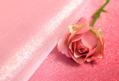 One pink rose on pink background Stock Images