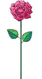 One pink rose on a stem Stock Images