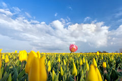 One pink tulip on yellow field Royalty Free Stock Image