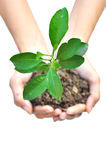 One plant in female hands Royalty Free Stock Photography