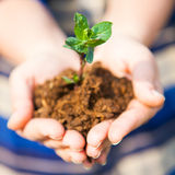 One plant in female hands. Ecology concept Stock Images