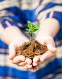 One plant in female hands. Ecology concept Royalty Free Stock Photos