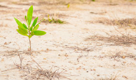 One plant growing in dry area Stock Image