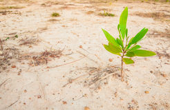 One plant growing in dry area Royalty Free Stock Photography