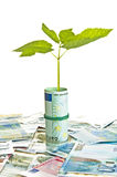 One plant growing from euro money Royalty Free Stock Images