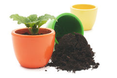 One plant in yellow cup and cup with ground. Royalty Free Stock Photos