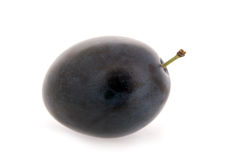 One plum Royalty Free Stock Photos