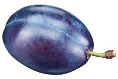 One plum isolated on a white. Stock Photos