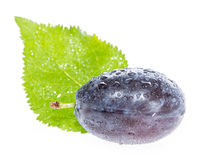 One Plum with leaf on white Stock Images