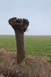 One Pollarded Willow In A Dutch Landscape