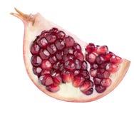 One pomegranate quarter slice isolated on white background profi Stock Image