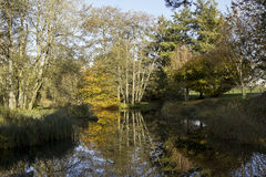 One of the ponds in Saint Fiachra's Garden Royalty Free Stock Images