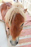 One pony in corral Royalty Free Stock Image