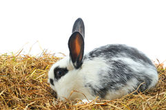 One pretty rabbit Stock Image