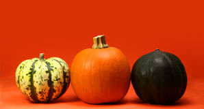 One pumpkin, two squash. On orange background Stock Image