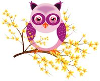 One purple owl on laburnum Royalty Free Stock Photo