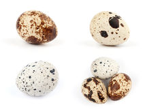 One quail egg Stock Photo