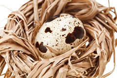 One quail eggs in the straw nest Royalty Free Stock Photography