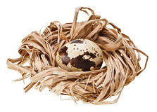 One quail eggs in the straw nest Stock Photo