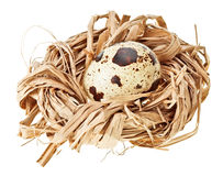 One quail eggs in the straw nest Stock Images