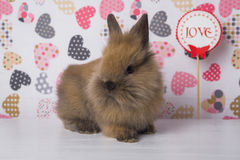 One rabbit on the background of hearts stock photos