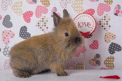 One rabbit on the background of hearts stock photo