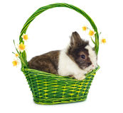 One rabbit in green basket Royalty Free Stock Photography