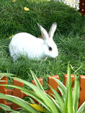 One rabbits in green grass Stock Photo