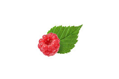 One raspberry with leaf  on white. Background Stock Photos