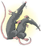 One rat scratches another rat's back Royalty Free Stock Images