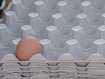 One raw egg lying lonely in the egg packaging Royalty Free Stock Photos